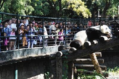 香山等公园国庆景观布置节后不落幕