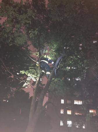 消防队员爬树处置.jpg