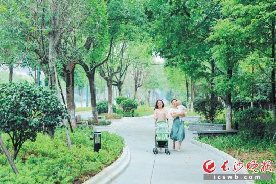 长沙县星沙大道人行步道两边树木茂盛,步步皆景。长沙晚报通讯员 章帝 摄