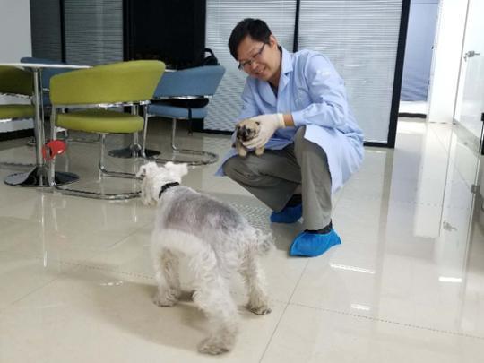 克隆宠物犬:争议相随 DNA一样却无法复制
