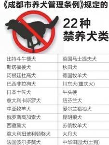 11月16日起 成都正式清理禁养犬