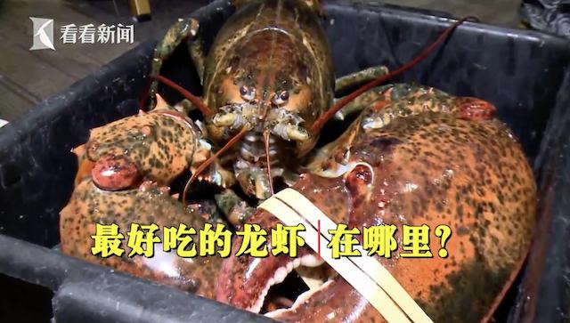 """淘""""最""""进博会:龙虾名扬万里 美味自有道理"""