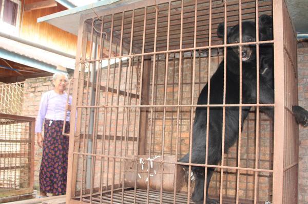 森警接到一老人求助电话:我家有头黑熊,养不起了