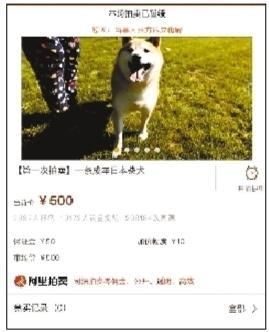 """主人""""现身""""付6万余元欠款 柴犬拍卖将暂缓(图)"""