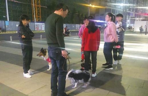 《长沙市养犬管理条例》明年5月1日施行