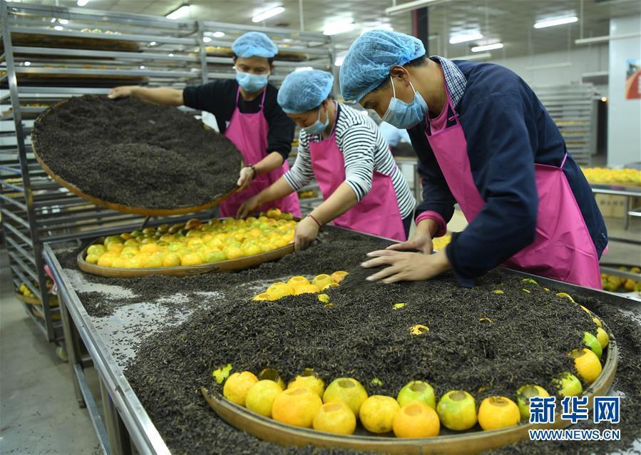 (社会)(8)柑果红 陈皮香