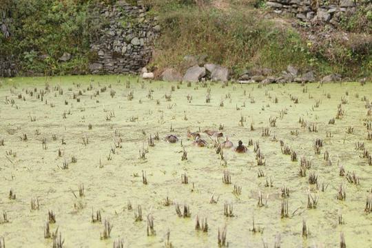 时兴乡下·湖南十八洞村:一个把乡下建得更像乡下的地方【9】