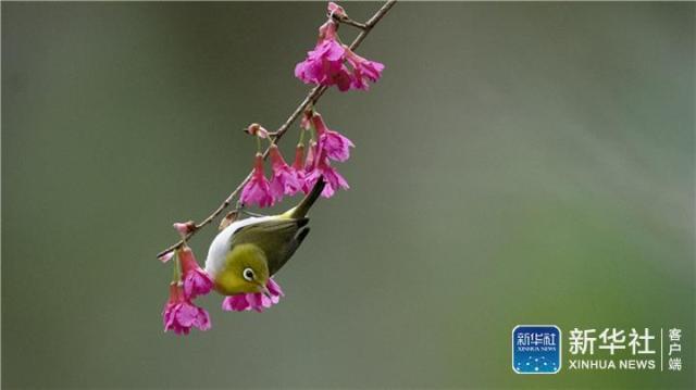 福州初春:红花春鸟共新景五行御妖奇谭
