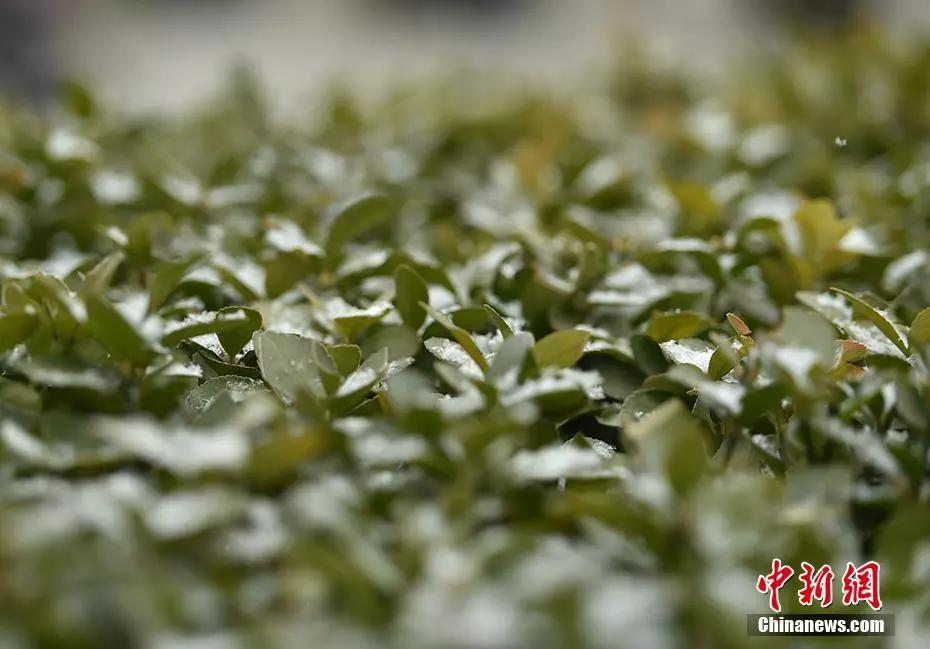 """北京又下雪了!这 评论网头条_次不是""""头皮屑""""!"""