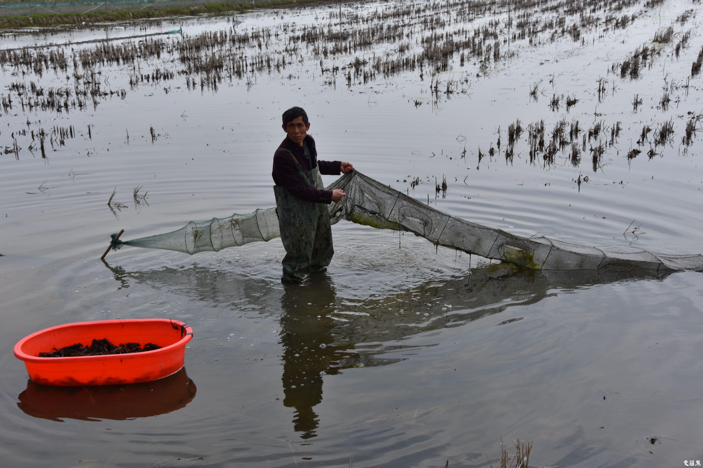 """""""水稻+龙虾"""",让这里的村民收入增三倍"""