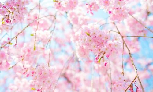有家美宿3月早春旅行地推荐春风十里,装好行李就出发,邂逅仙境般儿的春色!