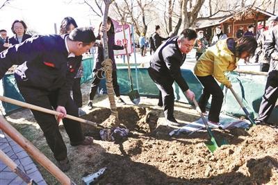 玉渊潭樱花预计下周报春