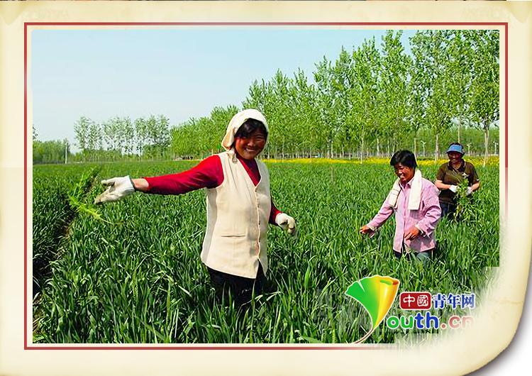 中国人的故事 人大代表王银香:脱贫致富靠实干