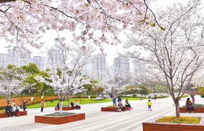 武汉50万株樱花树绽龙与魔法师黑龙故事放 20余个赏樱片区1天迎客30万