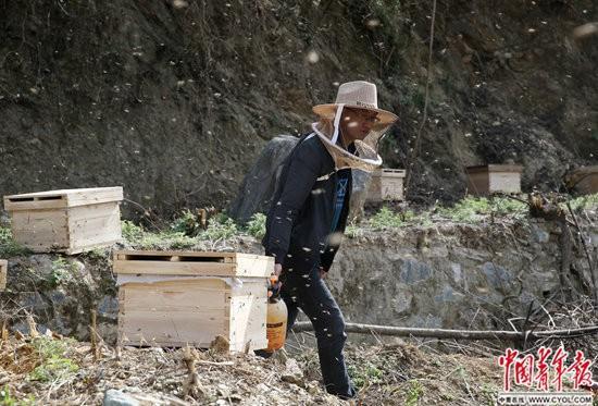 秦岭养蜂人:土蜂蜜在网上很抢手带动贫困户致富