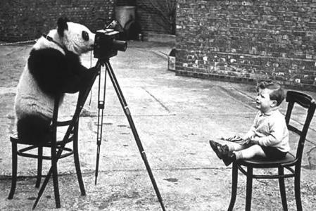 大熊猫明英国人二战的慰藉