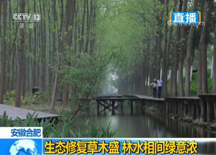 安徽合肥:生态修复草木盛 林水相间绿意浓详情