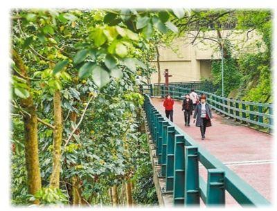 山城步道 扮靓中新社上重庆的怪异名片