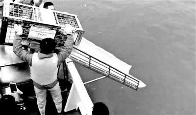 大连百头被盗斑海豹首批24头幼崽被放生