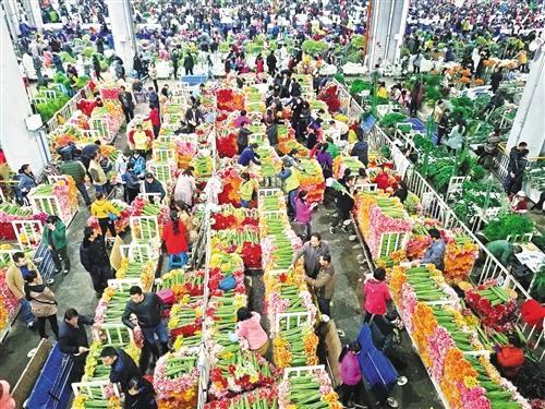"""2017年花卉产业销售额1533亿 花卉离""""日常消费品""""有多远"""