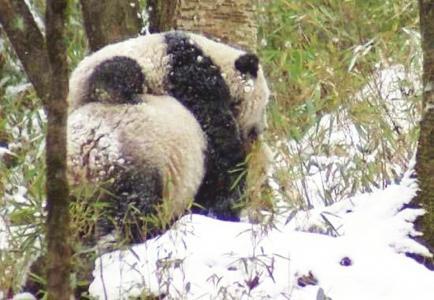 熊猫爷爷和他的弟子们