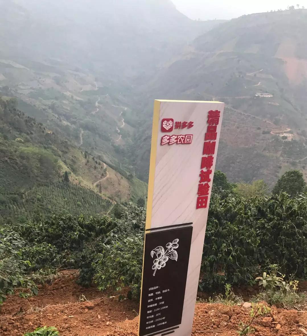 连星巴克都在用的云南咖啡豆,为何农户不赚钱?