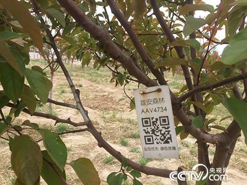 """""""千年秀林""""的每棵树都有属于自己的二维码,记录着这棵树的详细资料。(徐辉/摄)"""