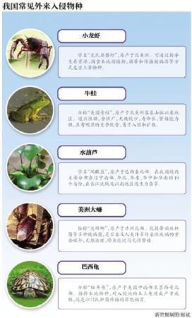 小龙虾上榜云南入侵物种名录 属于Ⅱ级严重入侵类