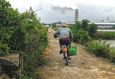 浙江乐清血蚶养殖消亡危机:污水处理厂挤占空间