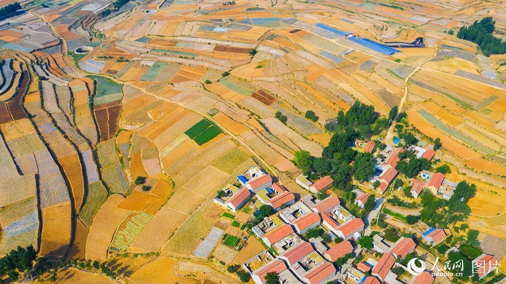 山東費縣在山區設立集中脫粒點,為農民免費打麥。麥秸由脫粒點回收再利用。此舉既防止農民焚燒秸稈污染環境和山火,又使資源得到再利用。陸啟輝攝