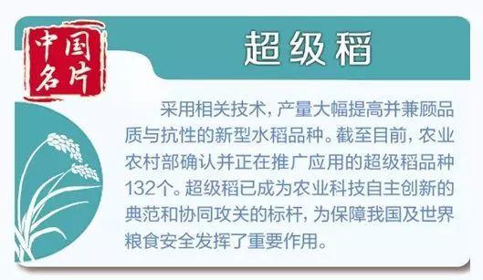"""超级稻为啥这么牛?原来袁隆平有个""""禾下乘凉梦"""""""