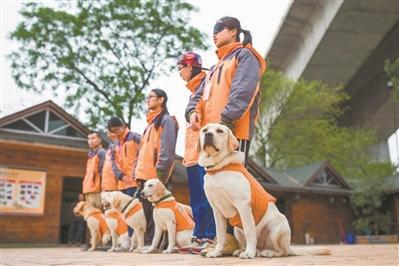資金不足、專業訓犬師缺乏  導盲犬供不應求