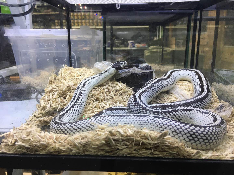 2000元巨蜥與10年刑期 爬寵圈商機背后涉法之爭