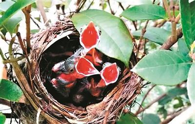 不掏鸟蛋 保护生态从一点一滴做起