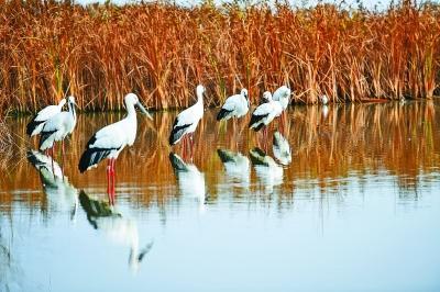 中国黄(渤)海候鸟栖息地(第一期)申遗成功的启示