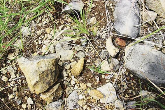 这些怪石头来自3亿年前! 云南建水发现古生物化石带