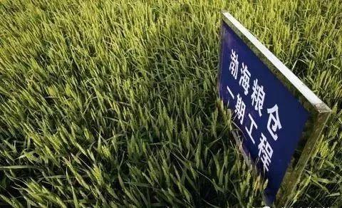 """""""渤海粮仓""""工程:五年增粮200多亿斤"""