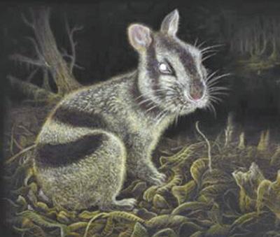 云南昭通發明600萬年前條紋兔