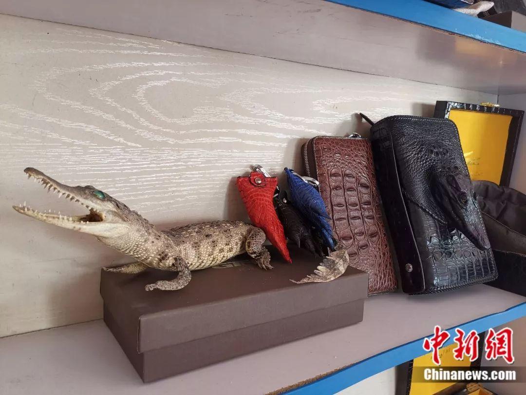 """山东仨小伙当起""""鳄鱼铲屎官"""" 还靠养鳄鱼致了富"""