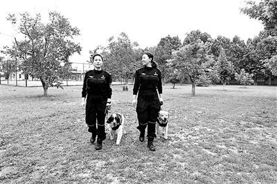 """警犬训练中的""""一家"""":""""妈妈""""和徒弟 炼成6条功勋犬"""