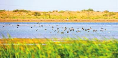 重点掩护鸟类集结黑河湿地