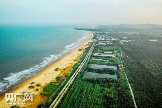 """海岸培育万亩生态林 山东日照打造""""黄金海岸线"""""""