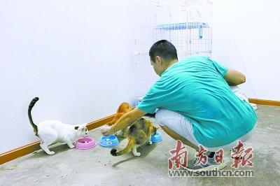 爱心人士:义务救助流浪动物 用爱架起生命桥梁