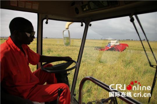 中国和非洲业界人士共同探讨配资公司加强水稻产业合作