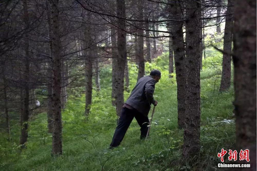 """用双手挖修��是一件�O其枯燥坑、刨土……""""独腿侠""""三十多年造林千�余亩"""