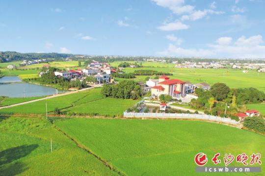 """宁乡拥有得天独厚的自然生态环境,非常适合发展种苗产业,因此有专家提出将宁乡建设成为""""中国种苗之都""""。  资料图片"""