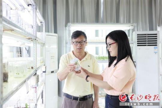 实验室里,刘志明教授(左)和助手正在观察培养瓶里的幼苗生长情况。  张禹 周伟 摄