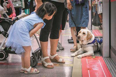 """导盲犬""""身份证""""多 上地铁有点难"""
