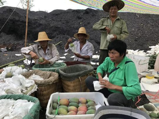 通过复土种植气泡qpao、筛分、烧制等方式