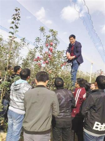 他扎根西北黄土高原30余年 让农民尝到种苹果甜头